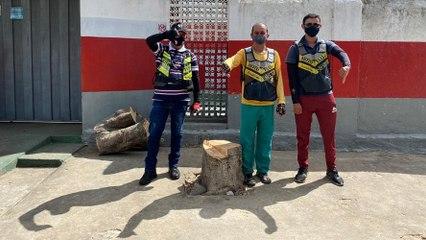 Mototaxistas denunciam desrespeito ao Meio Ambiente e corte de árvore na zona norte de Cajazeiras_720P HD
