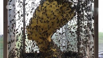 Esculturas feitas por abelhas: conheça o trabalho de Tomás Libertini