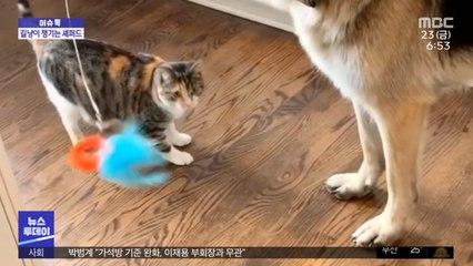 [이슈톡] 구조된 새끼 고양이 놀아주는 반려견