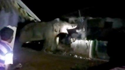 Panik in indischem Dorf: Riesiger Elefant geht auf Haus los