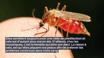 Voici pourquoi les moustiques sont attirés par des personnes plus que d'autres_IN