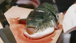 The Japanese eat 10,000 tons of fugu each year. Here's what makes the poisonous pufferfish so expensive.