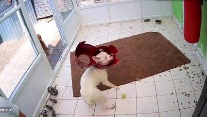 Hungriger Hund bleibt in Napf stecken und flippt aus