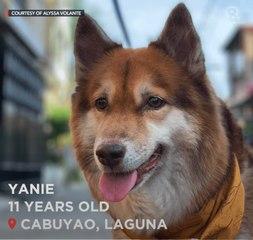 Meet Yanie, the peanut-butter-loving doggo