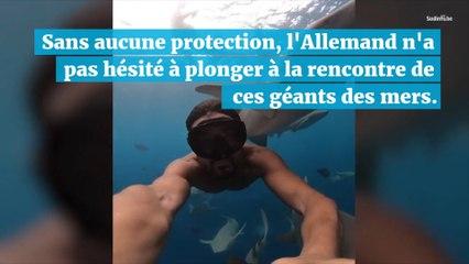 Incroyable : il se filme en train de nager… au milieu d'un banc de requins !
