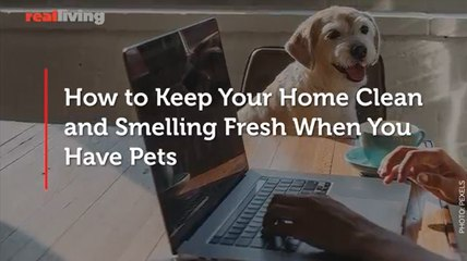How to Keep Your Home Clean and Smelling Fresh When You Have Pets