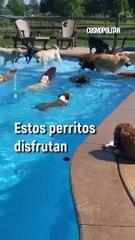 Perritos en la alberca   - Cosmopolitan México