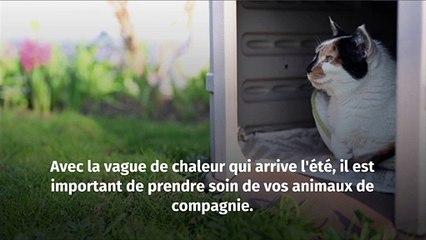 Vague de chaleur : Comment garder votre animal au frais