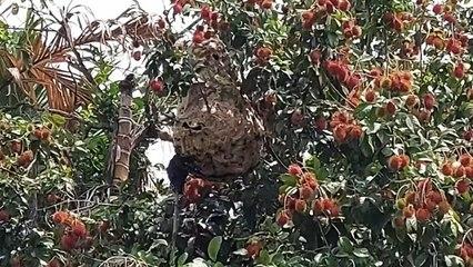 Seorang Warga di Tebing Tinggi Tewas Disengat Puluhan Lebah