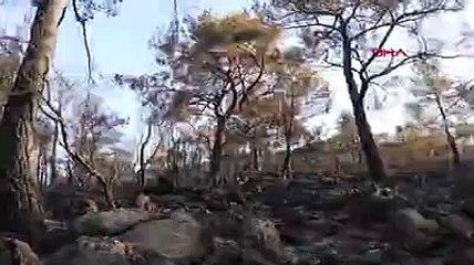Fethiye'de yangın 5 hektarlık alanı küle çevirdi