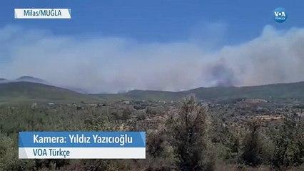 Milas'ta Orman Yangınları Sürüyor