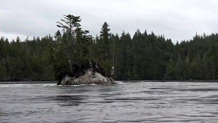 Île flottante ou illusion ?