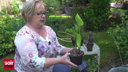 Les conseils jardin de Violaine : épisode 19