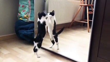 Funny Cat And mirror Video - Funny video - What's App Videos 30 Seconds Status Video