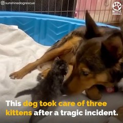 Pregnant RESCUE dog lost her puppies and raised MOTHERLESS kittens # ANIMAL LOVERS