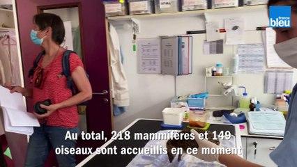 LPO_Alsace : rush d'animaux en détresse