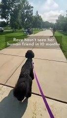 Une chienne reconnait un ami pas vu depuis 10 mois