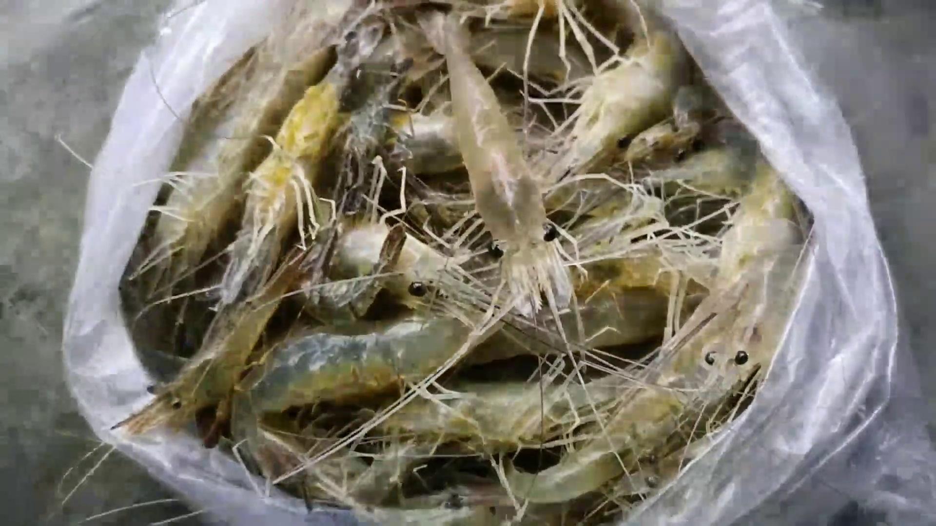 Chingri fry recipe || Prawn fry recipe