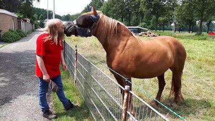 Paard contact met Marko Zwier