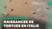 Le premier bain de ces bébés tortues en Italie va vous faire fondre