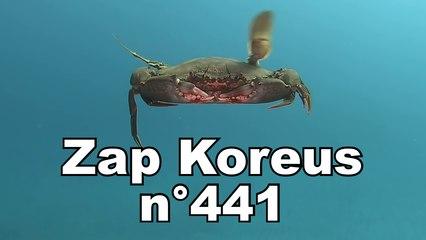 Zap Koreus n°441