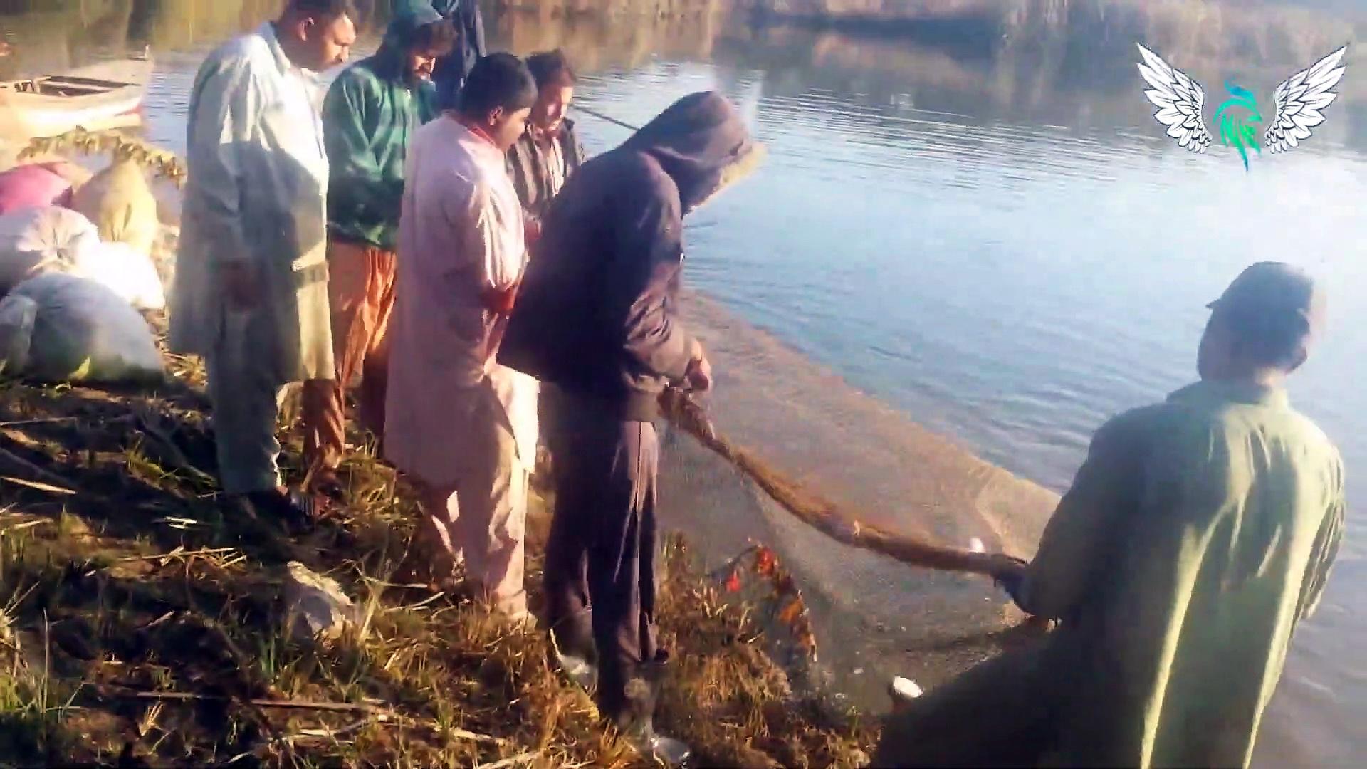 Net Fishing | Traditional Net Fishing In Village | Fishing in Chakwal Parhal Punjab Pakistan