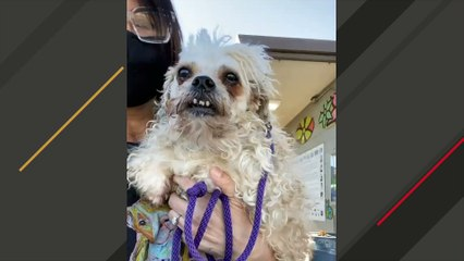 Woman uses her camera to save senior shelter dog