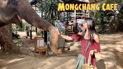 Zoo Cafe in Pattaya Thailand ~ Mongchang Cafe