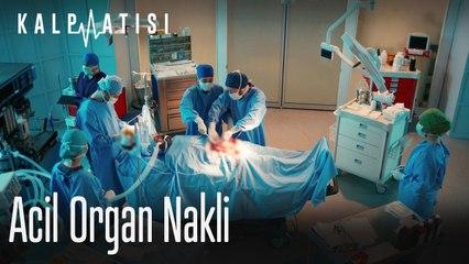 Acil organ nakli