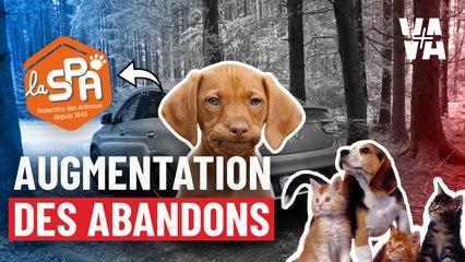 La SPA face aux abandons d'animaux