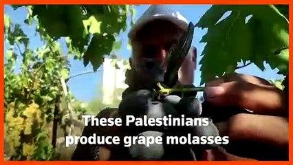Palestinians preserve traditional way of making grape molasses