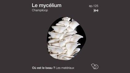 Podcast : Mycélium - Demain des objets en champignon ? - Où est le beau ?