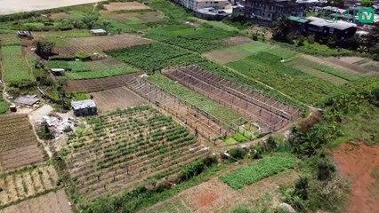 [#Reportage] Gabon: l'UOB, de temple du savoir à champ agricole