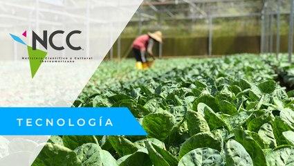 Agua magnetizada para mejorar el rendimiento de cultivos en Italia