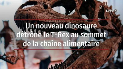Un nouveau dinosaure détrône le T-Rex au sommet de la chaîne alimentaire