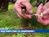 A la Une : C'est parti pour la cueillette des champignons / L'école des Mines au top ! / Rencontre avec Ignacio Ramirez - Le JT - TL7, Télévision loire 7