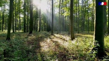 IUCN   Comment protéger les forêts face au changement climatique ?