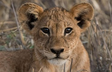 Mother fights off mountain lion attacking son
