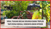 Viral Tukang Becak Disuruh Bawa Triplek Tapi Patah Semua, Videonya Bikin Nyesek