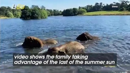 Video Shows Family of Elephants Splashing in the Water and Enjoying Last Bit of Summer