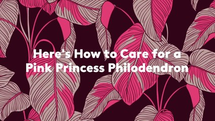 Here's How to Care for a Pink Princess Philodendron
