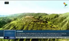 Aldeanos chinos protegen y restauran su entorno ecológico