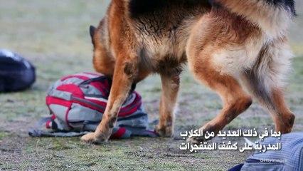 إجلاء الجيش الأمريكي يتسبب بترك عشرات الكلاب في أفغانستان