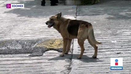 Familias se apartan de sus mascotas tras derrumbe en el Chiquihuite