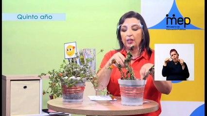 #AprendoEnCasa Ciencias: Proceso de fotosíntesis: concepto e importancia (Quinto Año - Primaria)