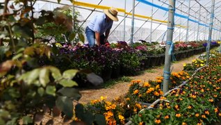 Family shifts to farming edible flowers as demand grows