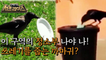 [HOT] The identity of a special cleaning staff in a French theme park?!, 서프라이즈 210919