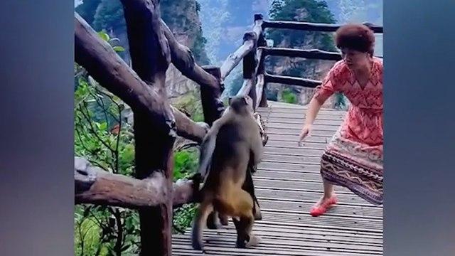 Elle pose son sac pour danser, un singe vient lui voler