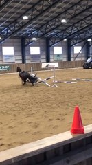 Horse Stops Abruptly While Jumping Hurdles Making Rider Fall to the Ground