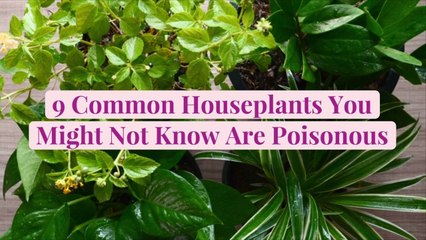 9 Common Houseplants You Might Not Know Are Poisonous